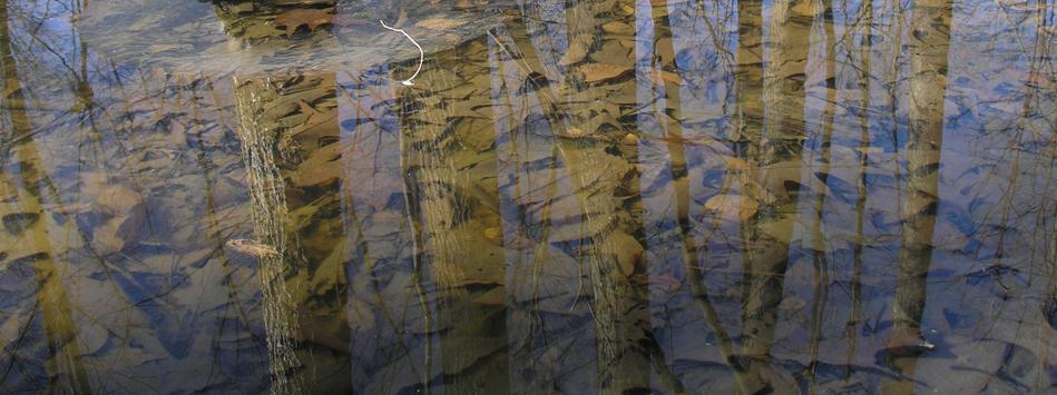 Wet-Trees-3-G
